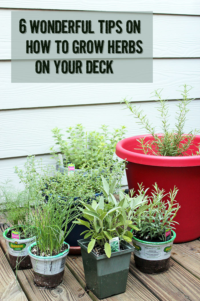6 Wonderful Tips On How To Grow Herbs On Your Deck