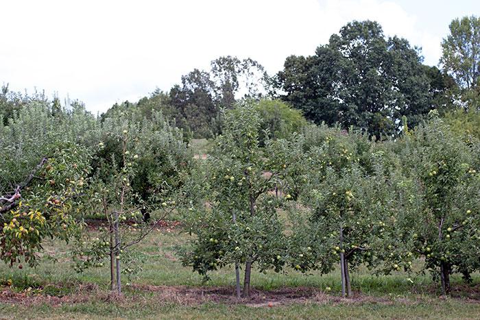 manzanas03
